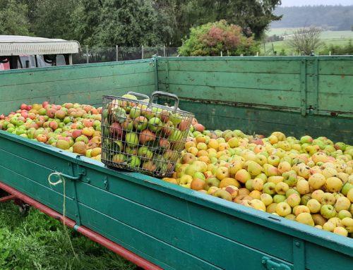 Vorankündigung: BuKi verkauft in Kürze biozertifizierten Apfelsaft