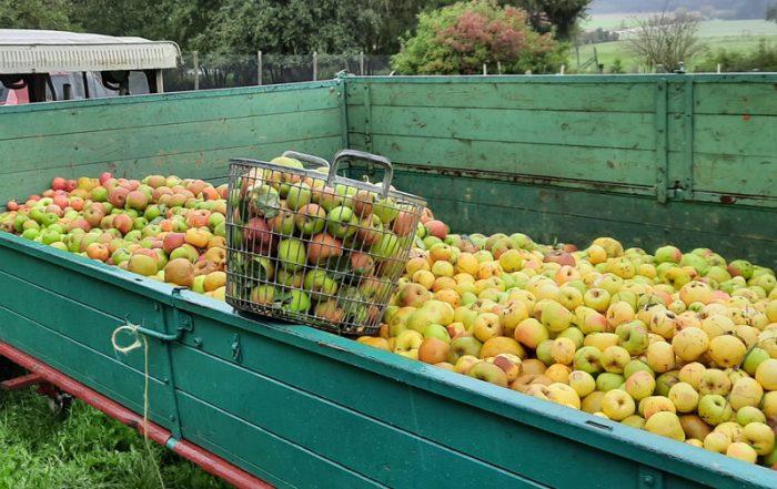 BuKi Biozertifizierter Apfelsaft