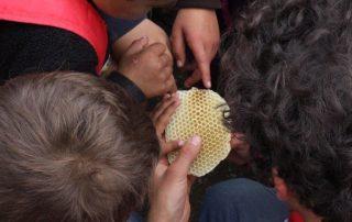 Honig-Herstellung: Bienenwoche