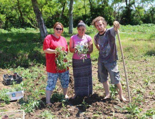 Gartenarbeit und Soziale Arbeit