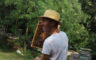 Bienen Honig Imker