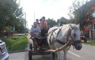 Reiten Pferdefuhrwerk Ausflug