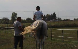 Sonnenuntergang Pferd